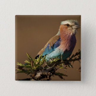 Kenya, Masai Mara Game Reserve. Lilac-breasted 15 Cm Square Badge