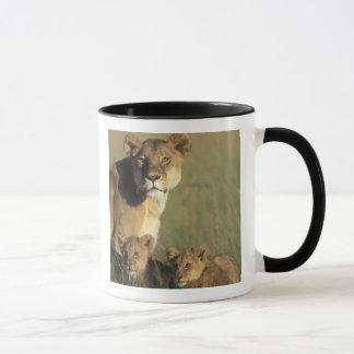 Kenya, Masai Mara Game Reserve, Lion cubs Mug
