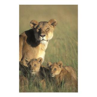 Kenya, Masai Mara Game Reserve, Lion cubs Photo Print
