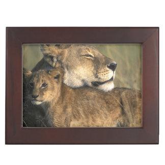 Kenya, Masai Mara Game Reserve, Lioness Keepsake Box