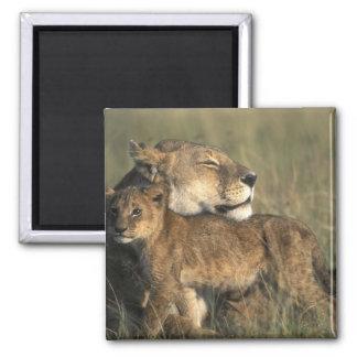 Kenya Masai Mara Game Reserve Lioness Refrigerator Magnets