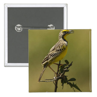 Kenya, Masai Mara Game Reserve, Upper Mara. 15 Cm Square Badge