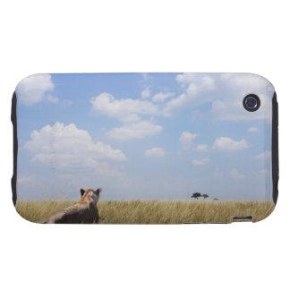 Kenya, Masai Mara iPhone 3 Tough Case
