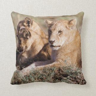 Kenya, Masai Mara, Lion Cubs Cushion