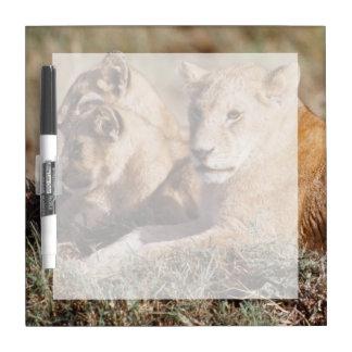 Kenya, Masai Mara, Lion Cubs Dry Erase Board