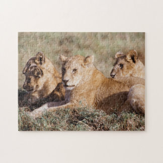 Kenya, Masai Mara, Lion Cubs Jigsaw Puzzle