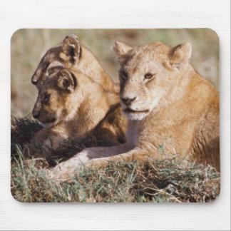 Kenya, Masai Mara, Lion Cubs Mouse Mat