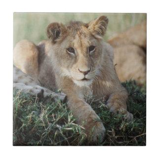 Kenya, Masai Mara, Lion Cubs sitting Tile