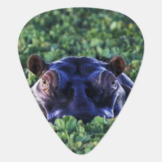Kenya, Masai Mara National Reserve. Pick