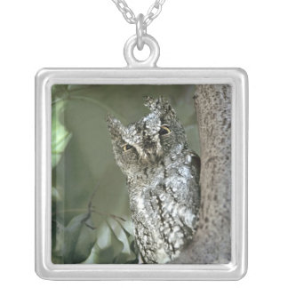 Kenya, Masai Mara Reserve. Close-up of Scops Silver Plated Necklace