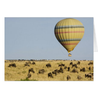 Kenya, Masai Mara. Tourists ride hot air balloon Card