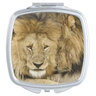 Kenya, Masai Mara. Two lions resting face to Compact Mirrors