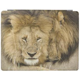 Kenya, Masai Mara. Two lions resting face to iPad Cover