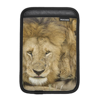 Kenya, Masai Mara. Two lions resting face to iPad Mini Sleeve