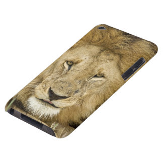 Kenya, Masai Mara. Two lions resting face to iPod Case-Mate Cases