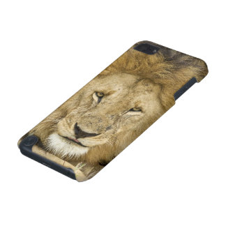 Kenya, Masai Mara. Two lions resting face to iPod Touch (5th Generation) Case