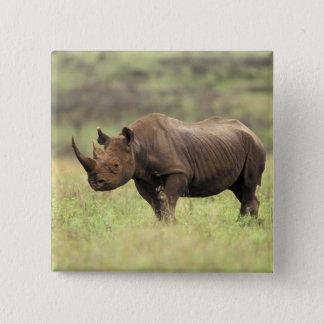 Kenya, Nairobi National Park. Black Rhinoceros 15 Cm Square Badge