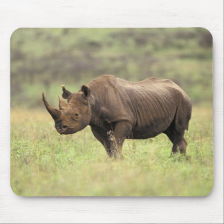 Kenya, Nairobi National Park. Black Rhinoceros Mouse Mat
