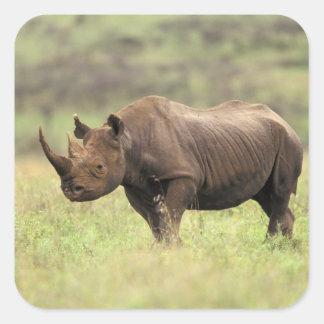Kenya, Nairobi National Park. Black Rhinoceros Square Sticker