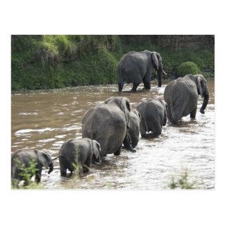 Kenya, No Water No Life Mara River Expedition, 2 Postcard