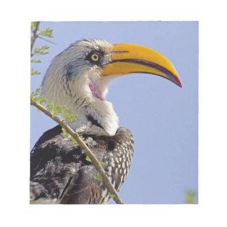 Kenya. Profile of yellow-billed hornbill bird. Notepad