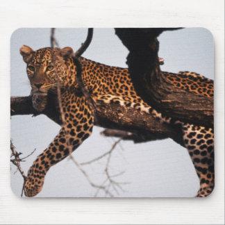 Kenya, Samburu Game Reserve Kenya, Leopard Mouse Mat
