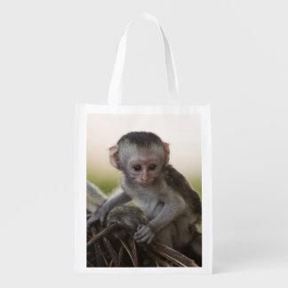 Kenya, Samburu Game Reserve. Vervet Monkey