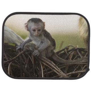 Kenya, Samburu Game Reserve. Vervet Monkey Car Mat