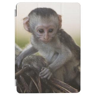 Kenya, Samburu Game Reserve. Vervet Monkey iPad Air Cover