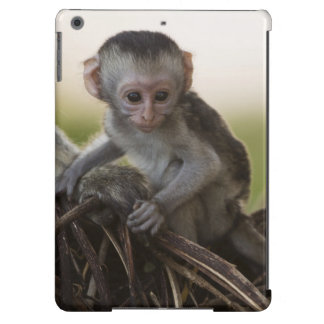 Kenya, Samburu Game Reserve. Vervet Monkey iPad Air Covers