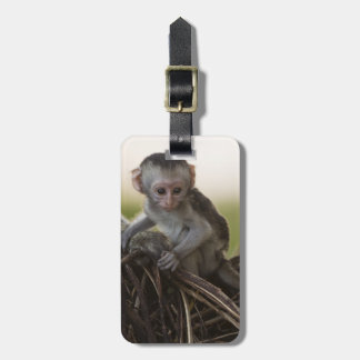 Kenya, Samburu Game Reserve. Vervet Monkey Luggage Tag