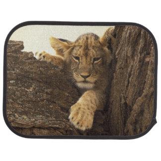 Kenya, Samburu National Game Reserve. Lion cub Car Mat