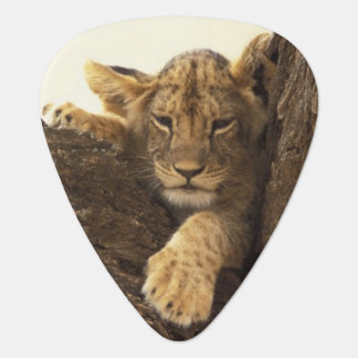 Kenya, Samburu National Game Reserve. Lion cub Guitar Pick