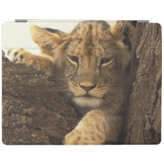 Kenya, Samburu National Game Reserve. Lion cub iPad Cover