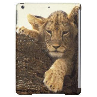 Kenya, Samburu National Game Reserve. Lion cub Cover For iPad Air