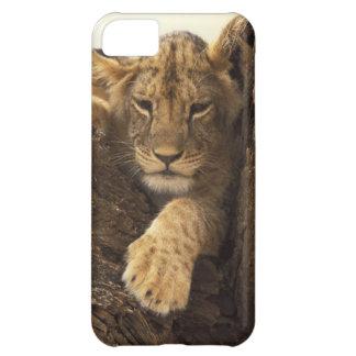 Kenya, Samburu National Game Reserve. Lion cub iPhone 5C Case