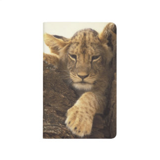Kenya, Samburu National Game Reserve. Lion cub Journal