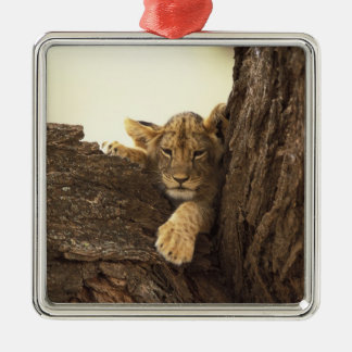Kenya, Samburu National Game Reserve. Lion cub Silver-Colored Square Decoration