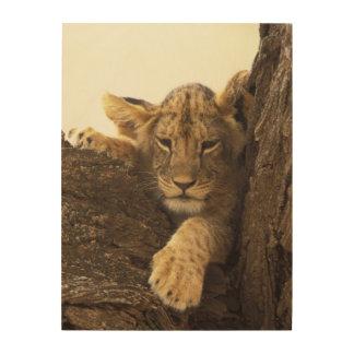 Kenya, Samburu National Game Reserve. Lion cub Wood Wall Decor