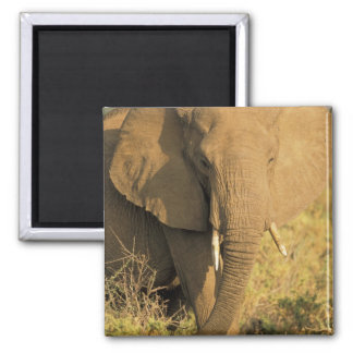 Kenya, Samburu National Reserve. African Refrigerator Magnet