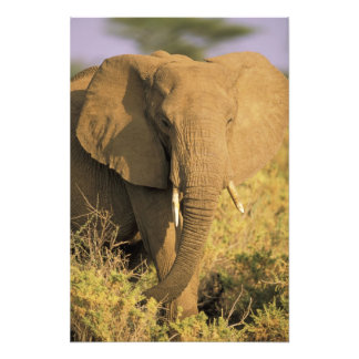 Kenya, Samburu National Reserve. African Photo Print