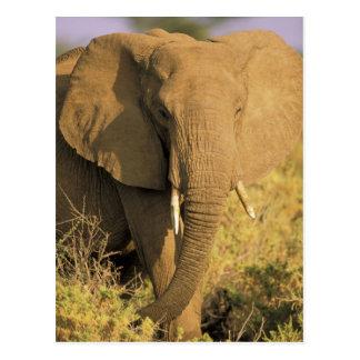 Kenya, Samburu National Reserve. African Postcard