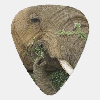 Kenya, Samburu National Reserve. Close-up of Guitar Pick
