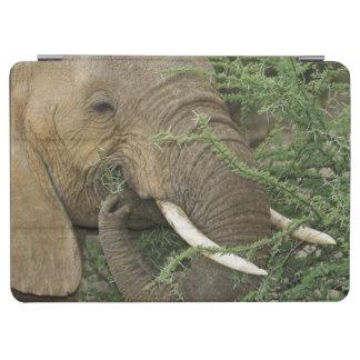 Kenya, Samburu National Reserve. Close-up of iPad Air Cover