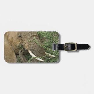 Kenya, Samburu National Reserve. Close-up of Luggage Tag