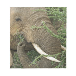 Kenya, Samburu National Reserve. Close-up of Notepad