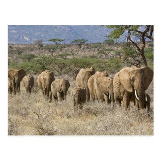 Kenya Samburu National Reserve Elephants Post Card