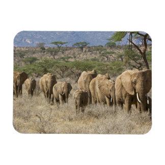 Kenya, Samburu National Reserve. Elephants Rectangular Photo Magnet