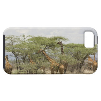 Kenya, Samburu National Reserve. Rothschild iPhone 5 Cover