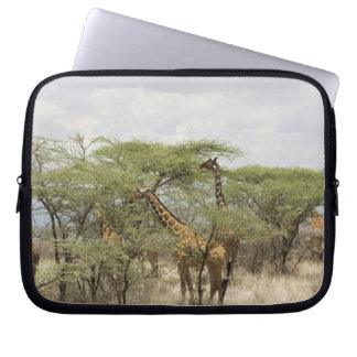 Kenya, Samburu National Reserve. Rothschild Laptop Sleeve